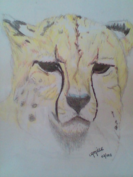 Dessin dessin animaux crayon de couleur nature felin - Dessin de nature ...