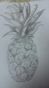 dessin fruits ananas fruits crayon : Exotic