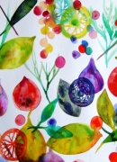 dessin fruits fruits celine marcoz aquarelle : Fruits