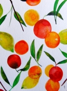 dessin fruits fruits celine marcoz : Fruits