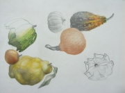 dessin nature morte nature morte coloquintes citrons fruits d automn : Automne