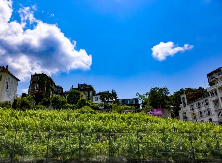 Montmartre - Les Vignes vue Sud