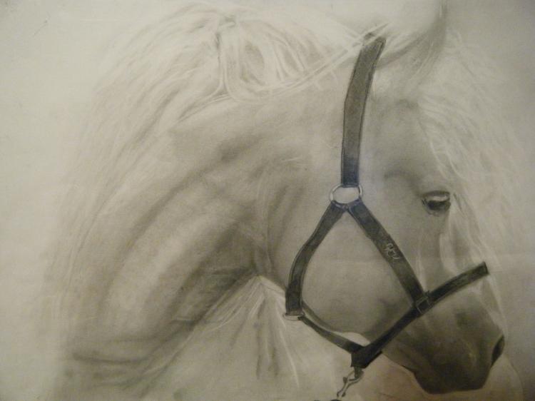 Le cheval blanc amoureux