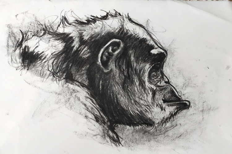 DESSIN de Poret dessin animalier artiste animalier singe - Portrait de Chimpanzé n° 6