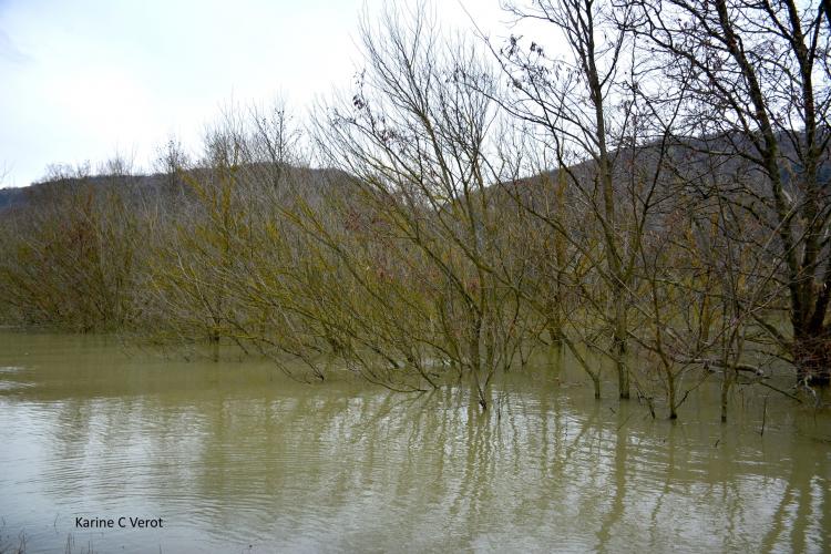 Plaine alluviale du Rhône