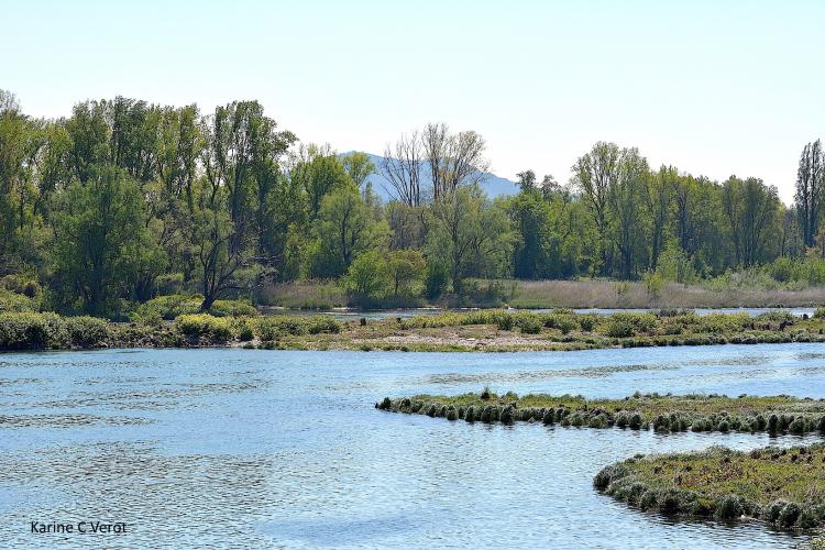 Le cours du Rhône