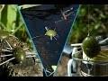 Truc et astuces n°22 : Fabrication leurre insecte pour la pêcher en surface