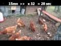 Comment construire un poulailler : plan parc à poules design à fabriquer