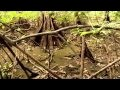 Waterlife (1/4) : l'importance de l'eau sur Terre - Documentaire