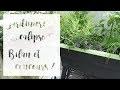 Jardinière Calipso : On fait le point + Concours sur Instagram !