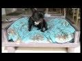 canapé pour chien en palette