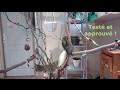 Fabrication d'un arbre à perruches ou perroquets