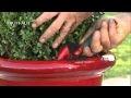 Comment planter un arbuste en pot ? - Jardinerie Truffaut TV