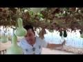 les gourdes - Lagenaria siceraria