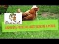 Comment aider une poule au jabot bouché à vomir