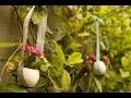 Suspension Oeuf fleuri - Décoration de la maison pour Pâques