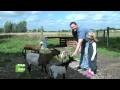 Des chèvres tondeuses de pelouse - Tous au vert