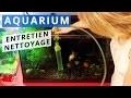 Aquarium : entretien et nettoyage