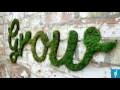 Ces artistes ont inventé le graffiti écologique, voici la recette !