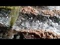 Diorama rivière montagne marecage