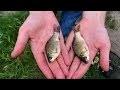 5 pièges poissons faits maison