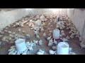 Mon élevage poulet de chaire avec simple matériel