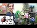 chaine de Jardinage: Comment faire un bouquet sur structure: Art floral et Compositions florales: