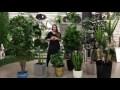 Les plantes artificielles - Decors Veronneau