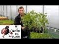Chaine tv de Jardinage:Semis de tomates+entretien+taille+arrosage(Comment faire un semis de tomates)