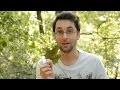 Le Guide Magique des instruments de la nature (musique verte)