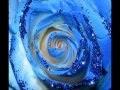 Fleurs bleues - Blue roses