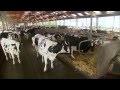 La production de lait pour alimenter l'être humain