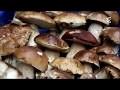 Les champignons - documentaire