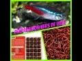 Comment préparer des vers de vase pour vos poissons [Mister guppy 14]