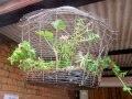 La cage aux fleurs