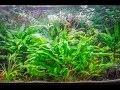 Création d'une rampe LED d'aquarium maison