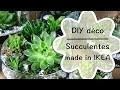 DIY - Créer une décoration de succulentes | tutoriel facile de succulentes made in IKEA #1