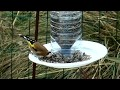 silo pour graines d'oiseaux