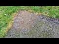 Comment se débarrasser de la mousse sur une terrasse ? au sol, sans produits chimique ni sel javel
