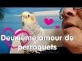 Comment élever plusieurs perroquets selon Diane...