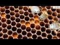La connaissance de l'abeille et de ses produits