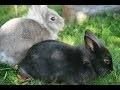 Idées pour fabriquer une cage à lapins nains