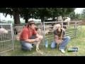 Reportage sur la vie d'une bergere et du berger dans le Beaujolais.avi