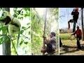 Comment grimper aux arbres ? Les différentes techniques