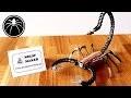 â–º Sculpture Scorpion en Métal #MarsSculptureChallenge