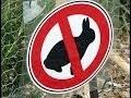 Protéger les plantations contre les lapins