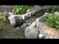 Jardin d'eau de démonstration chez Jardins Aquadesign (2e partie)