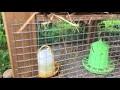 Fabrication poulailler : Poules et cailles