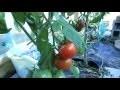 Fabriquer Ma serre à tomates