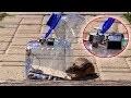 Comment faire un piège à Écureuil - Rat - Souris - Oiseau avec Bouteille de plastique